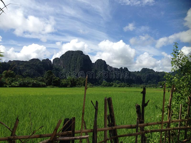 Rice Fields in Laos stock photography