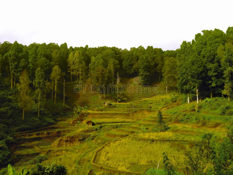 Rice fields in mountain valleys image. Rice fields mountain valleys image stock images