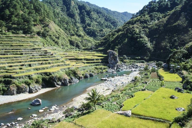 Rice fields nordliga luzon philippinesna arkivbilder