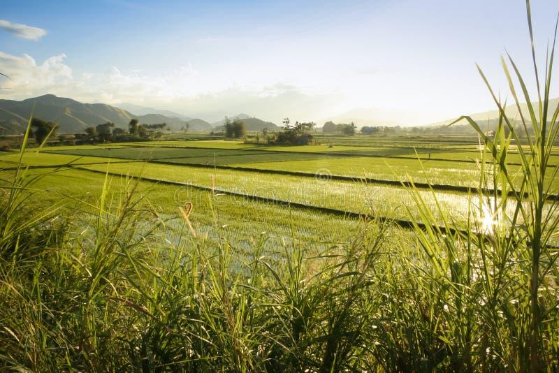 Rice fields nordliga luzon philippinesna royaltyfria foton