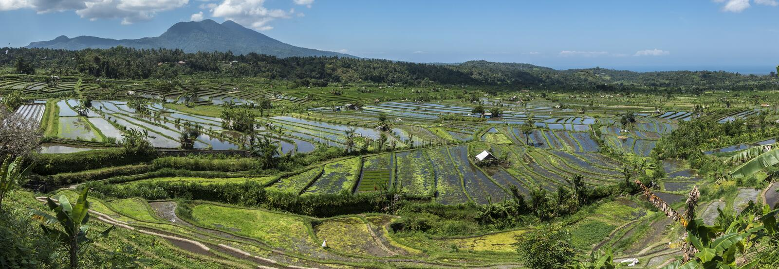 Rice fields panorama and volcano royalty free stock images