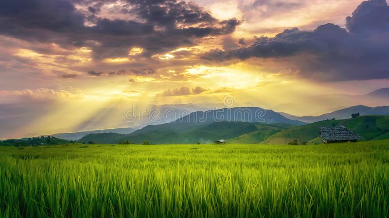 Rice fields on terraced of Baan Pa Bong Pieng Mae Chaem District. Chaingmai, Thailand. Thailand landscapes stock image