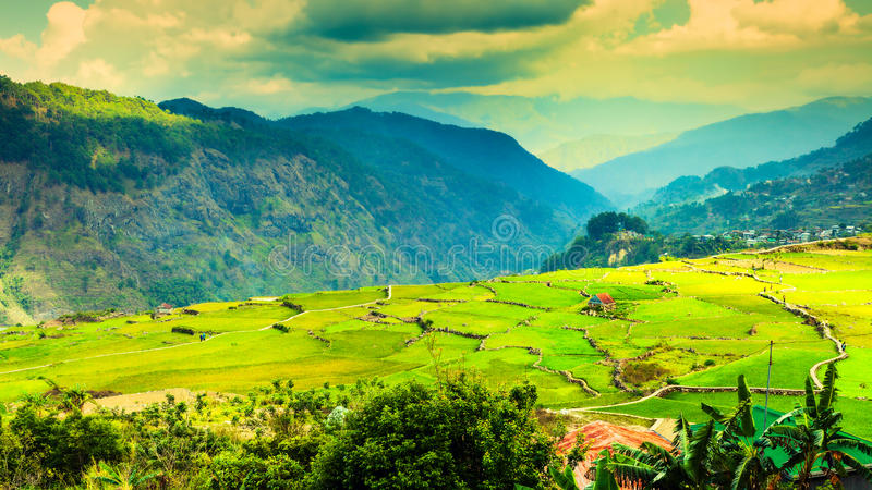 Rice fields on terraced at Chiang Mai, Thailand stock image