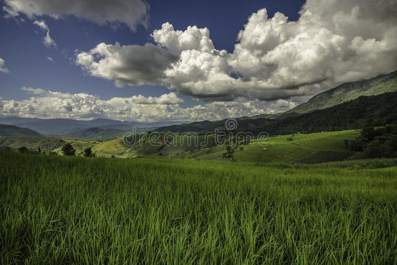 Rice fields on terraced landscapes.blue sky royalty free stock image
