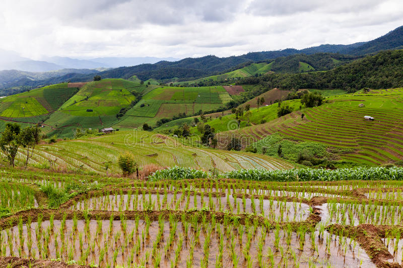 Rice fields on terraced of Pa Pong Pieng, Mae Chaem, Chiang Mai, Thailand - Vibrant color effect stock images