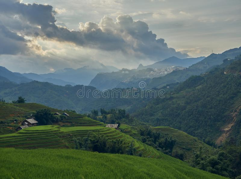 Rice fields on terraced of Sa Pa, YenBai, Vietnam. Rice fields prepare the harvest at Northwest Vietnam.Vietnam landscapes royalty free stock image