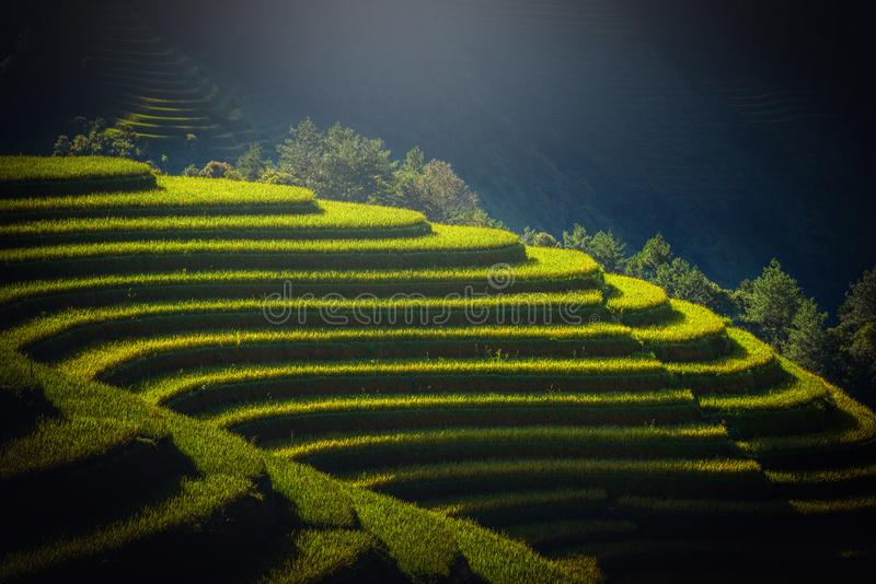 Rice fields on terraced at sunrise in Mu Cang Chai, YenBai, Vietnam. stock images