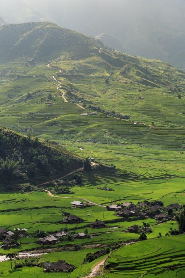 Rice fields on terraced of Tu Le, YenBai, Vietnam royalty free stock photos