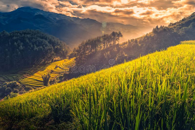 Rice fields on terraced with wooden pavilion at sunrise in Mu Cang Chai, YenBai, Vietnam royalty free stock photos