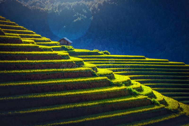 Rice fields on terraced with wooden pavilion at sunrise in Mu Cang Chai, YenBai, Vietnam stock photography