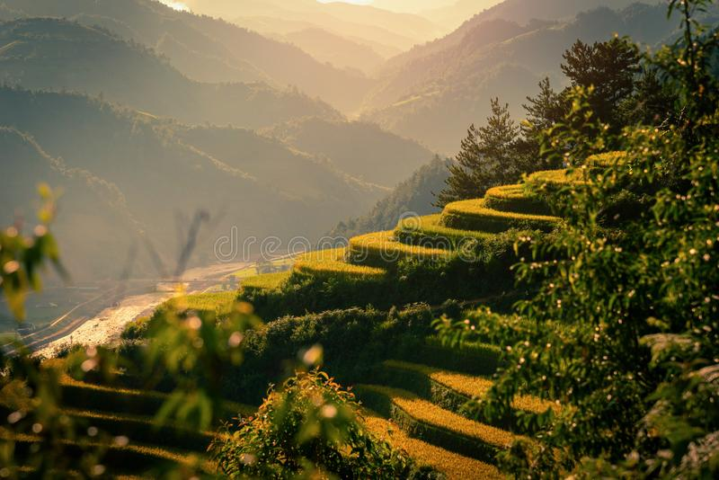 Rice fields on terraced with wooden pavilion at sunset in Mu Cang Chai, YenBai, Vietnam royalty free stock images