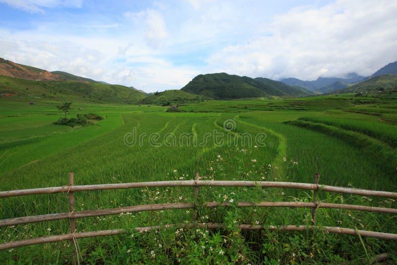 Rice fields on terraced of Xa Nam Bung, Vietnam royalty free stock photos