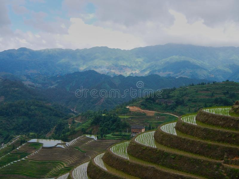 Rice fields terraces in Guilin in the province of Guangxi, China stock image