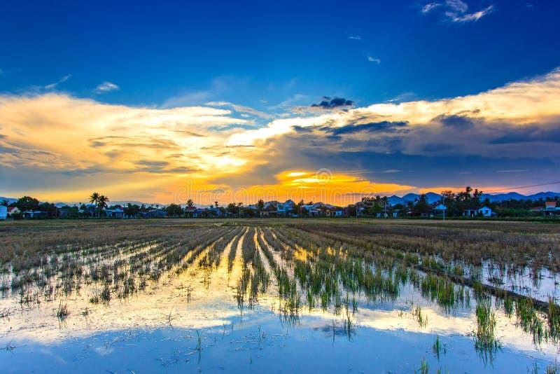 Rice Fields Free Public Domain Cc0 Image