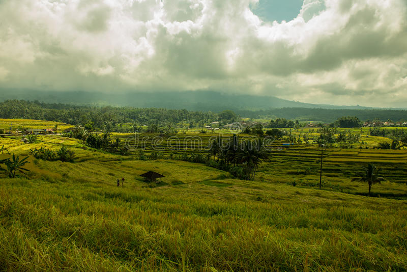 Rice fields, World Heritage site, Bali Indonesia stock photography