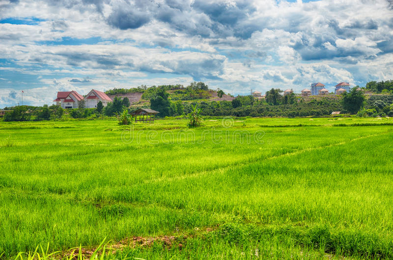 Rice filed around home. Thailand stock photography
