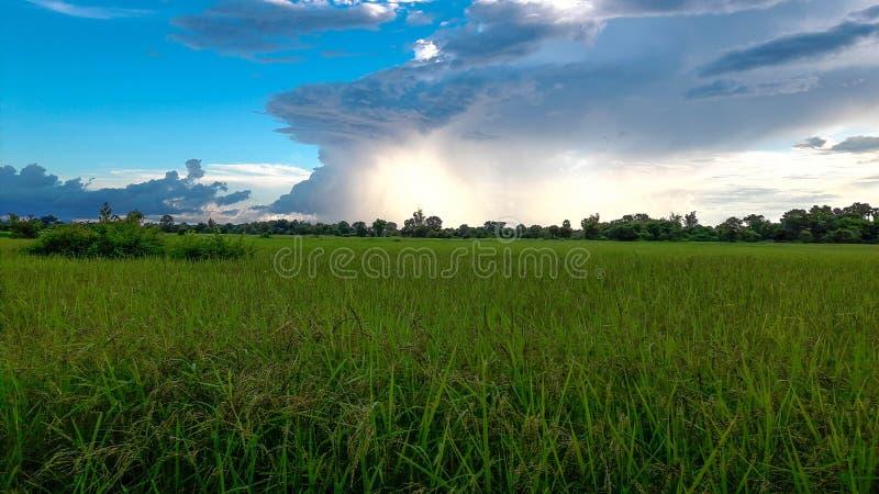 Rice filed in Don deng Island royalty free stock photos