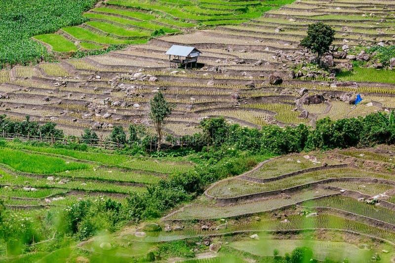 Rice góra przy Pa i taras Bong Piang blisko Inthanon parka narodowego Chaem i Mae, Chiangmai, Tajlandia obraz stock