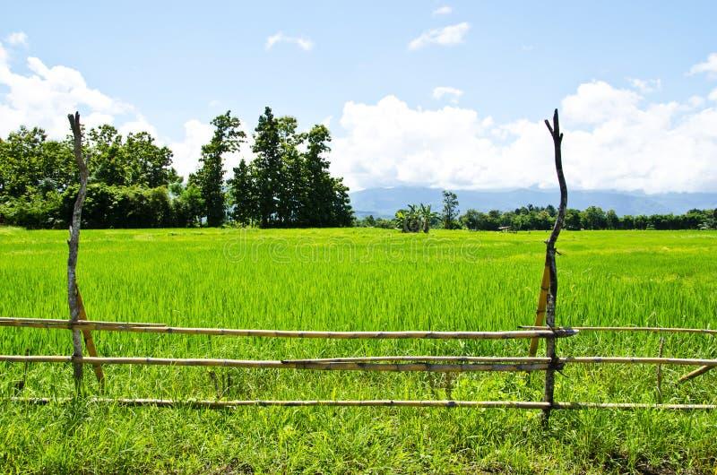 Download Rice Gospodarstwo Rolne Dziewięć Obraz Stock - Obraz złożonej z chmura, asia: 57671557