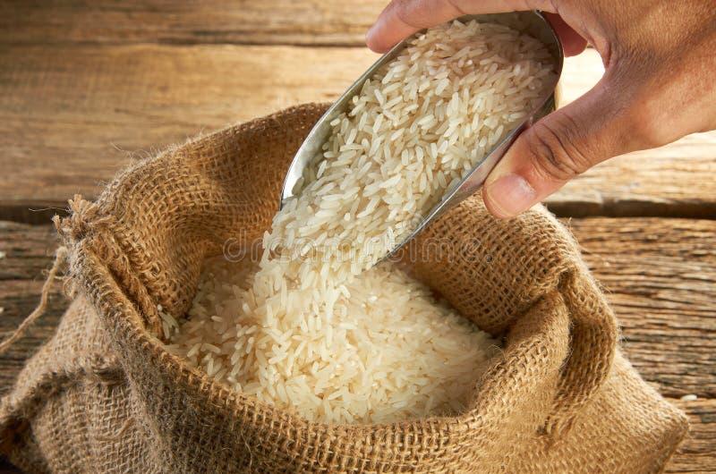 Rice Grain stock images