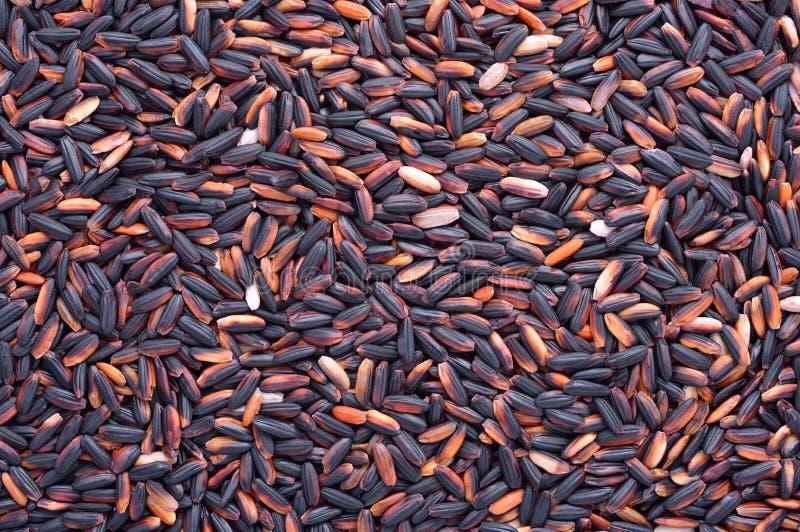 Download Rice grain stock image. Image of crop, paddy, rice, food - 28737147