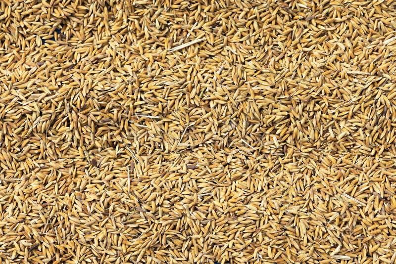 Rice grains royalty free stock photo