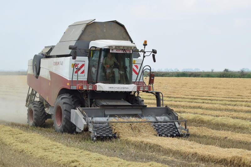 Rice harvesting by the combine. Russia, Poltavskaya village - September 27, 2015: Rice harvesting by the combine. Autumn harvesting on fields royalty free stock images