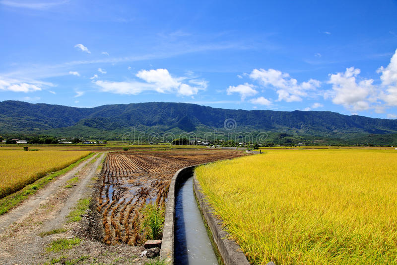 Rice Hometown in Taidong,Taiwan royalty free stock photo