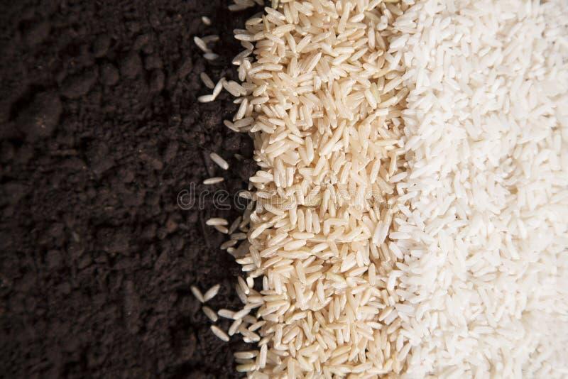Rice i Brud zdjęcia stock