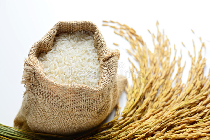 Rice i burlapsäck fotografering för bildbyråer
