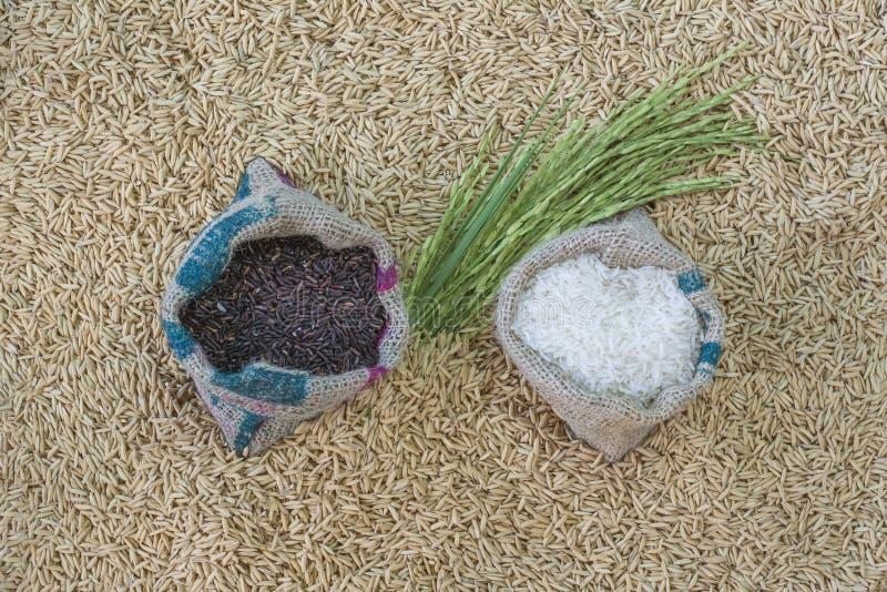 rice kärnar ur royaltyfri bild