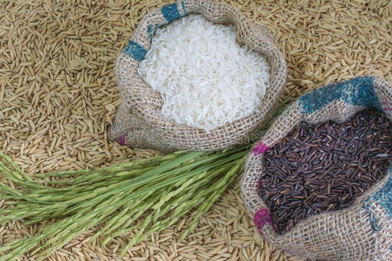 rice kärnar ur arkivfoto