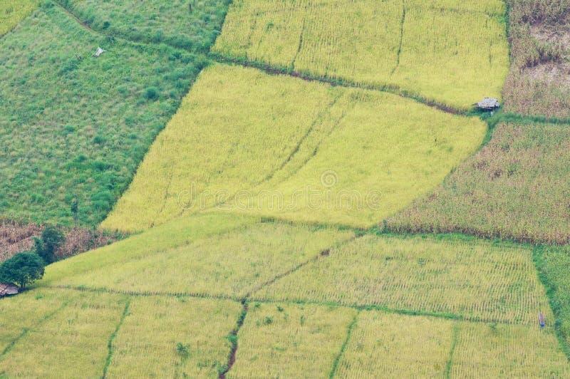 Download Rice och havrefält arkivfoto. Bild av stege, lantbruk - 27285830