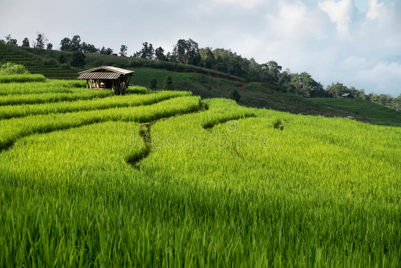 Rice odpowiada, Wiejski widok górski z pięknym krajobrazem obrazy stock