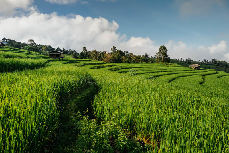 Rice odpowiada, Wiejski widok górski z pięknym krajobrazem obraz royalty free