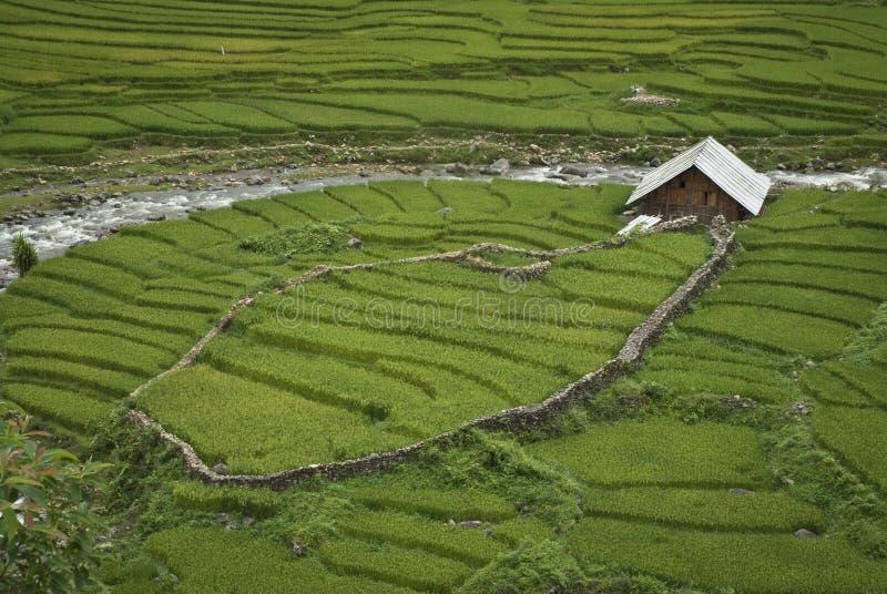 Download Rice Paddies stock photo. Image of mountain, china, fence - 18417220