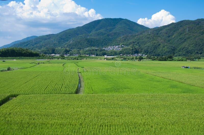 Rice Paddies Stock Photography
