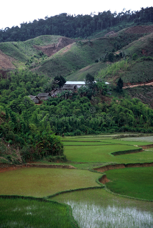 Download Rice Paddies,Madagascar stock image. Image of view, africa - 8549423