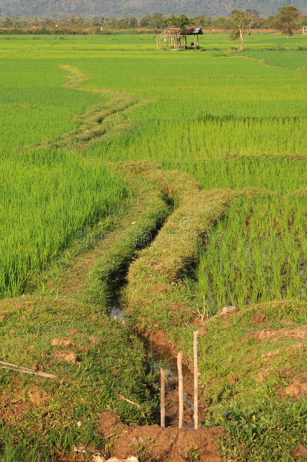 Download Rice Paddies Near Champasak Stock Photo - Image: 27863874