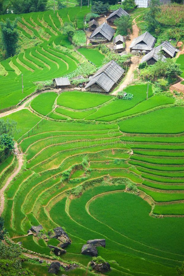 Free Rice Paddy Stock Images - 10961024