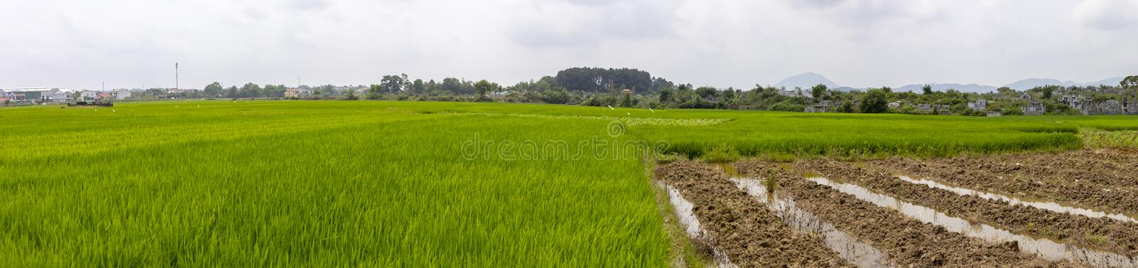 Rice paddy field Hue Vietnam. Panorama of green rice paddy field in countryside in Hue, Vietnam royalty free stock images