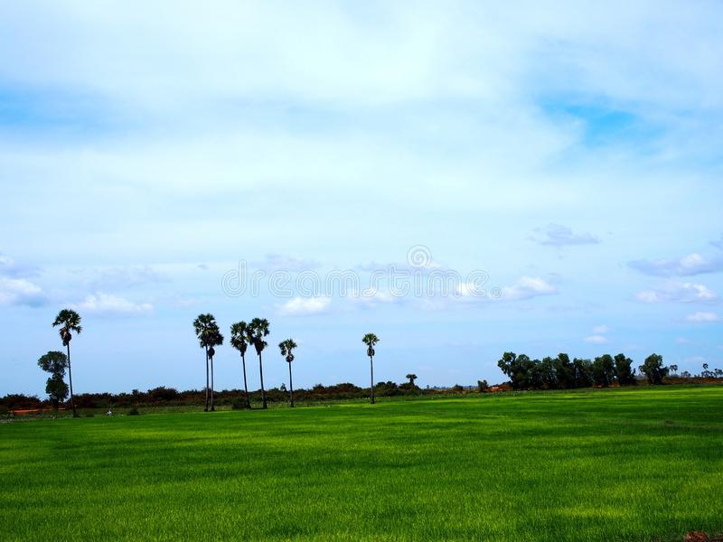 Rice Paddy Field, Siem Reap Cambodia stock image