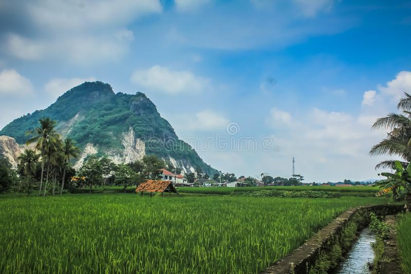 Rice paddy field valley stock photos