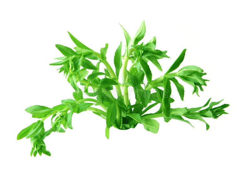Download Rice Paddy Herb stock photo. Image of leaf, aromatica - 5244272