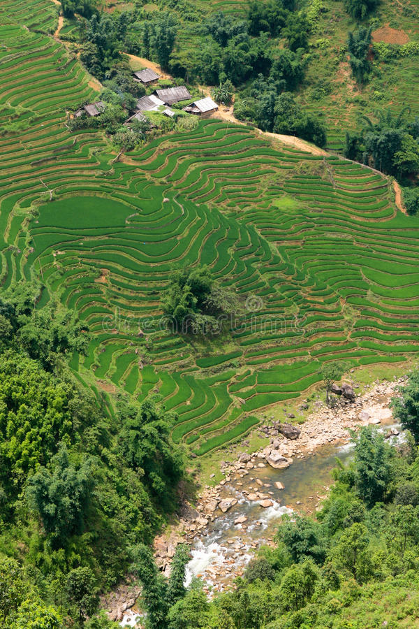 Download Rice paddy river view stock image. Image of agri, color - 17313673