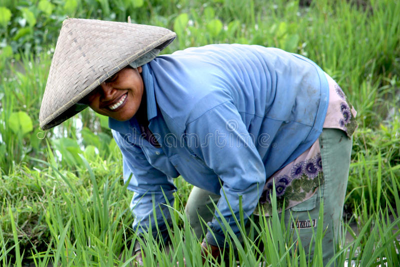 Rice Paddy Worker stock photography
