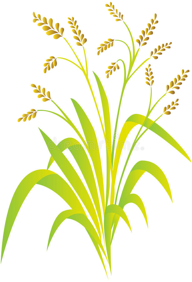 Download Rice plant stock vector. Image of blade, heavy, green - 11277904