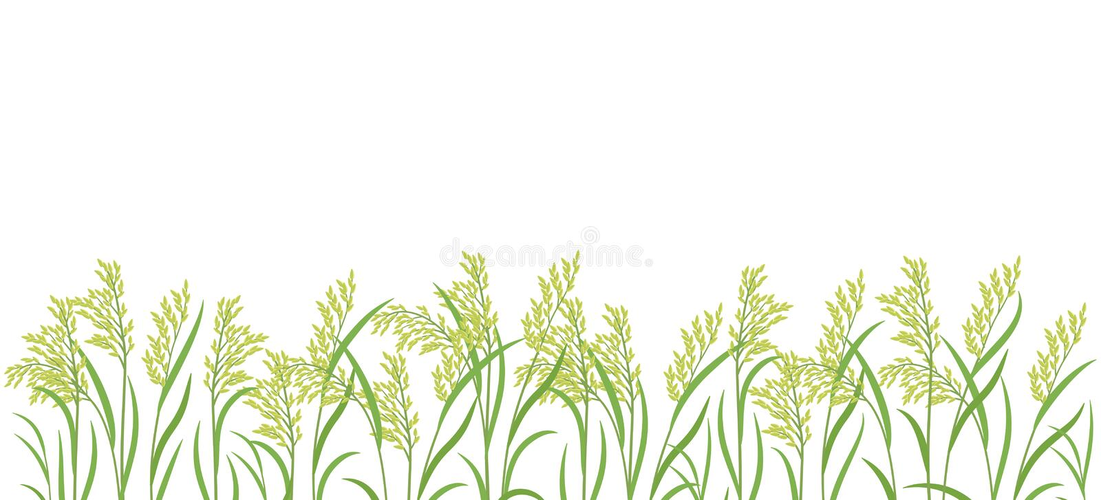 Rice plant green field. Horizontal banner. Oryza sativa. Cereal grain. Place for text. Copy space. Harvest vector. Agricultural. Vector background. Agronomy royalty free illustration