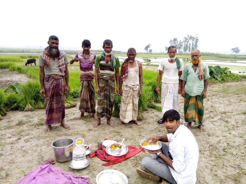 Rice plantation royalty free stock photo