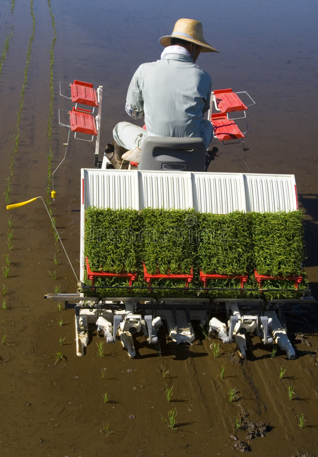 Download The Rice Planter II Stock Image - Image: 2454831